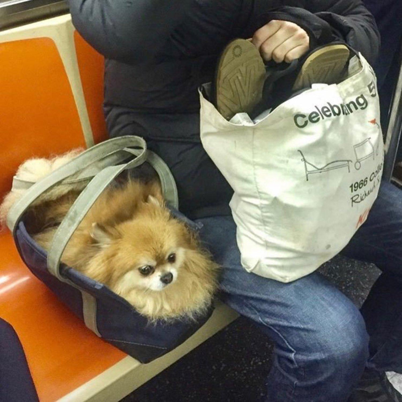 📷: @karakocktails  #bagdogs #bagdog #dogsinbags