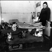 Kathy in her bunker with all her cats. The bunker used to be a former storage space for Amtrak.