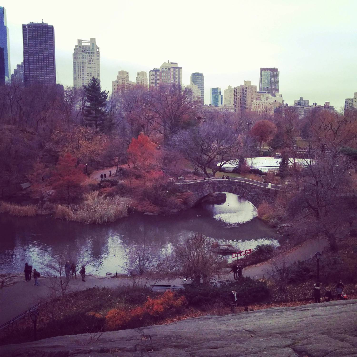 Central Park yesterday afternoon