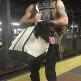Grand Central bagdog