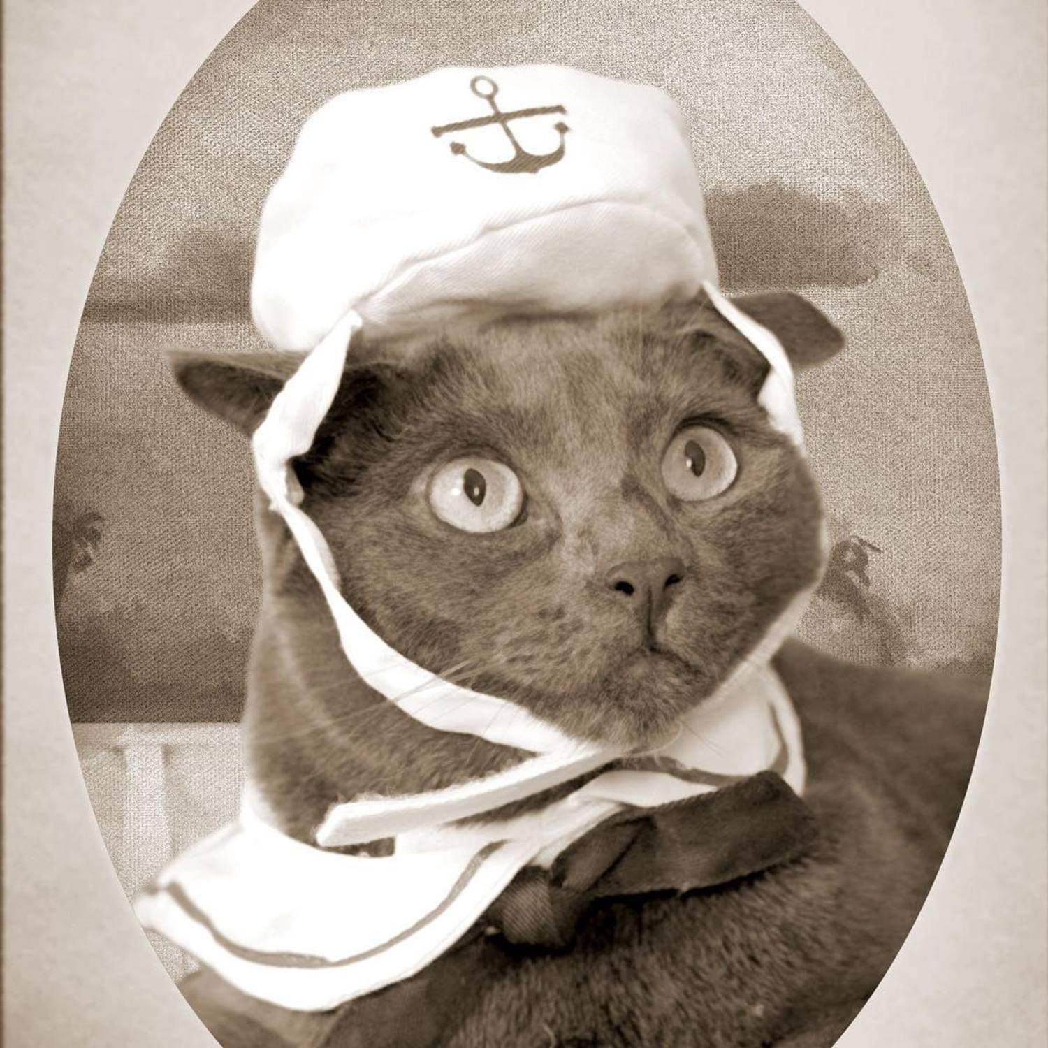 Just found this photo of my cat Arthur from when he was in the Feline Navy. They were the only maritime service whose ships never touched the water.