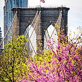 Brooklyn Bridge, Brooklyn