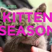 It's Kitten Season Again!