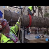 Raw: Rockefeller Center Christmas tree arrives in NYC