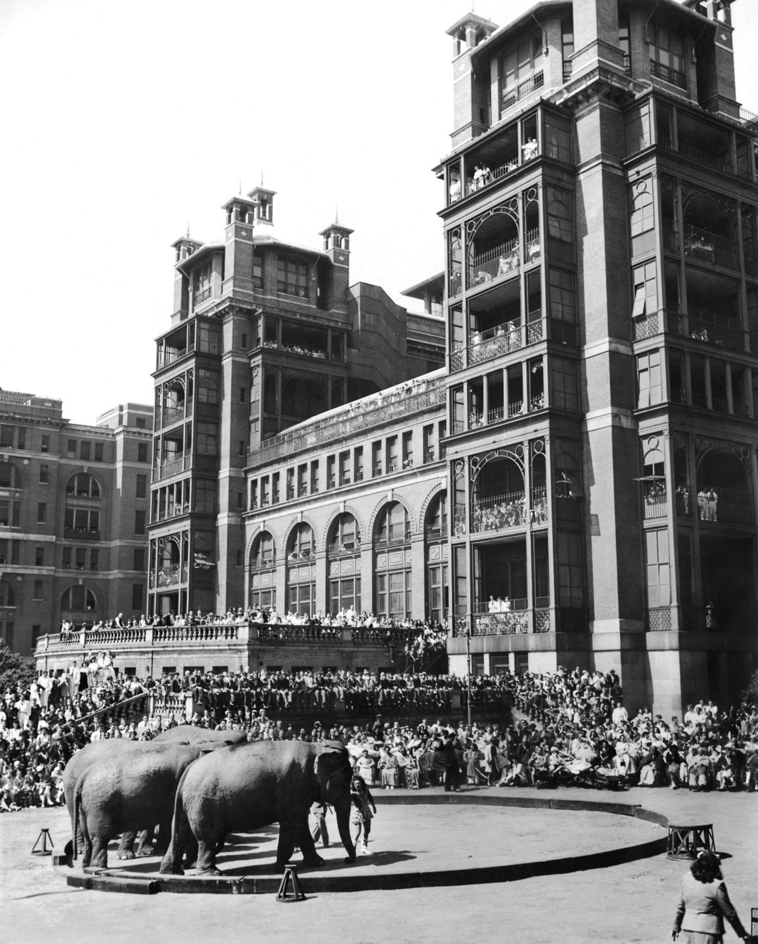 "May 2, 1946: On its annual visit to Bellevue Hospital in Manhattan, the Ringling Brothers and Barnum & Bailey Circus drew record-breaking crowds — a ""throng of 6,000, including outgoing patients, and more than a generous sprinkling of neighborhood youngsters"" The Times reported. ""For many, it was their first circus,"" The Times explained, ""such as tiny Oscar Turner, 5, wrapped in a pink bathrobe several sizes too large, who gave his nurse a most busy time. Oscar kept up a frequent charge to the red arena. He dared the elephants, he challenged the clowns, he laughed and pranced. 'Great medicine,' said Pat Valdo, the Big Show's Ringmaster."""