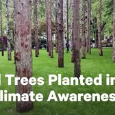 Artist Plants 'Ghost Forest' for Climate Crisis