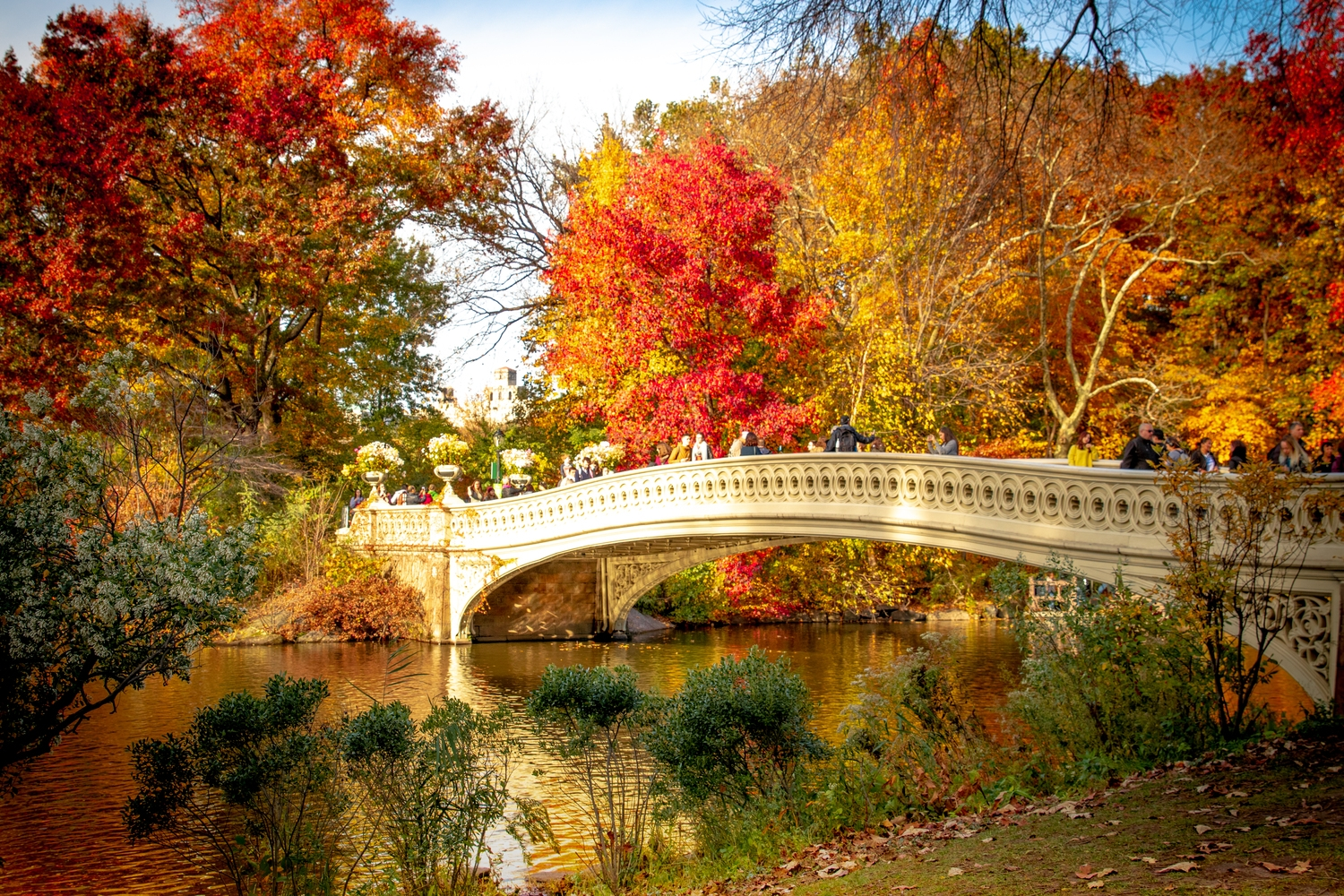 2018 Central Park Fall Foliage Map