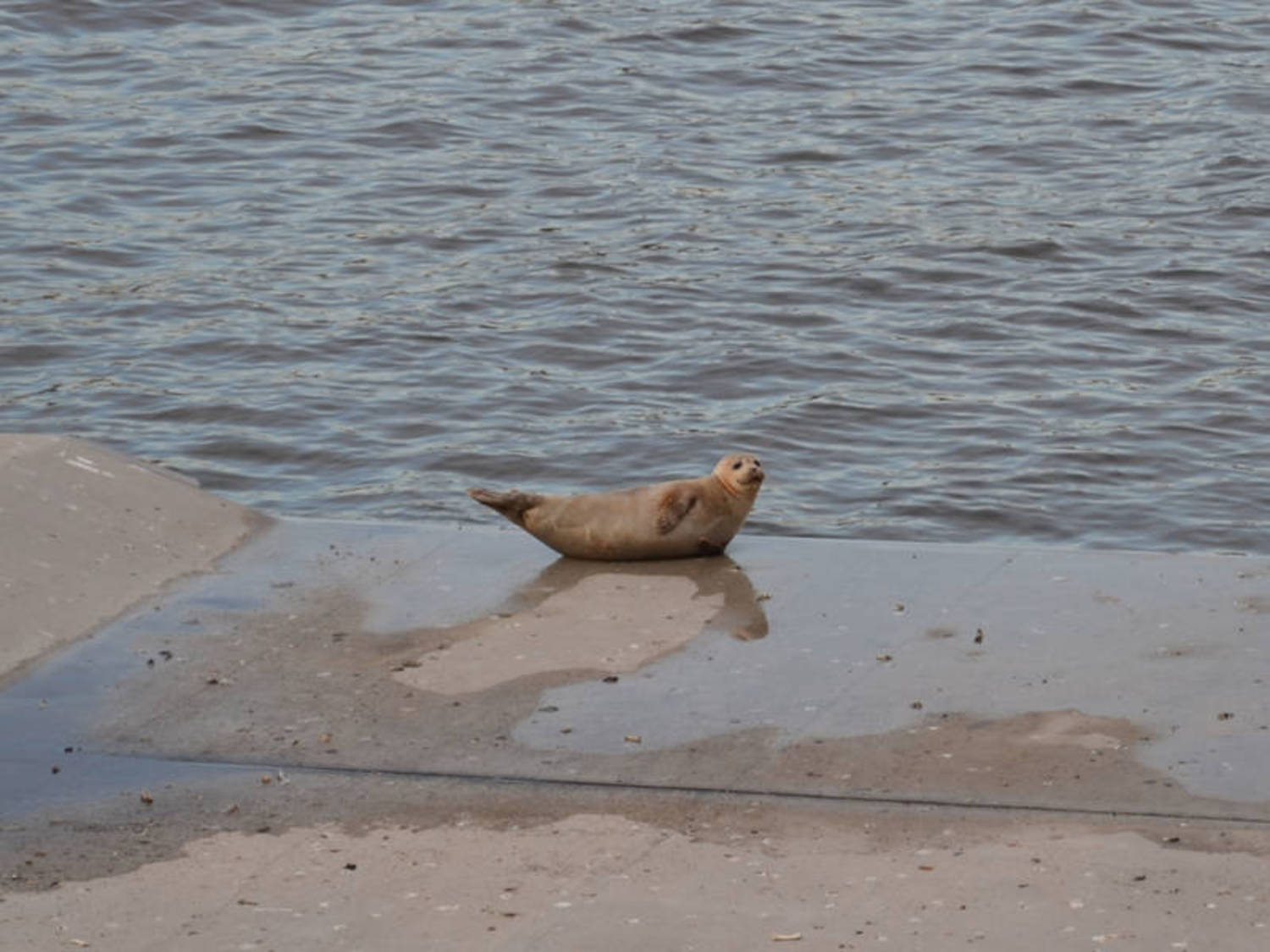 Closeup of Brooklyn Bridge Park Seal