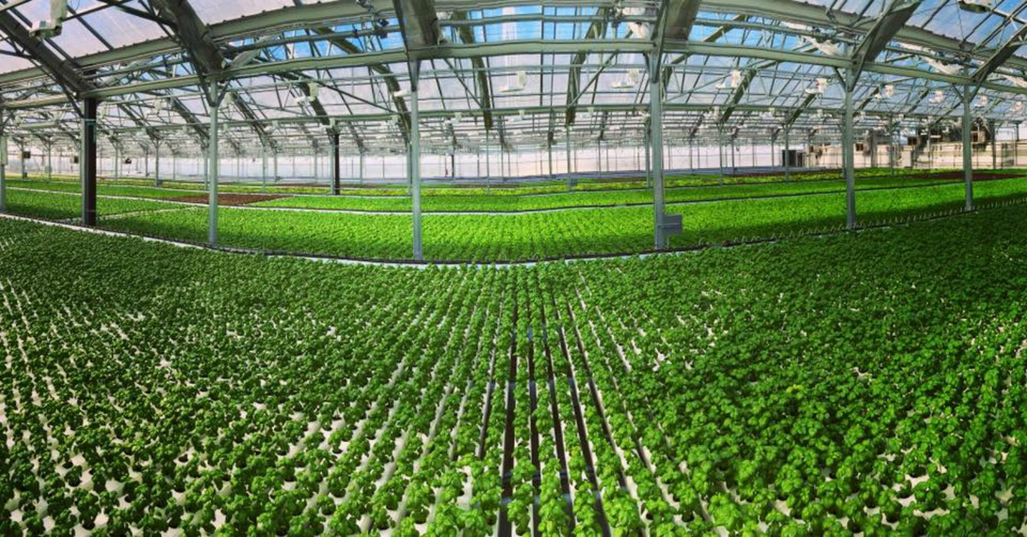 Everyone's favorite urban agriculture company, Gotham Greens, has opened up their third and largest New York City rooftop greenhouse in Hollis, Queens.