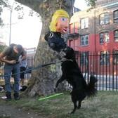 Sweet gig alert: Make $15/hour handing out Donald Trump dog poop bags