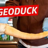 Breaking Down Geoduck (The World's Weirdest Delicacy) - Snack Break