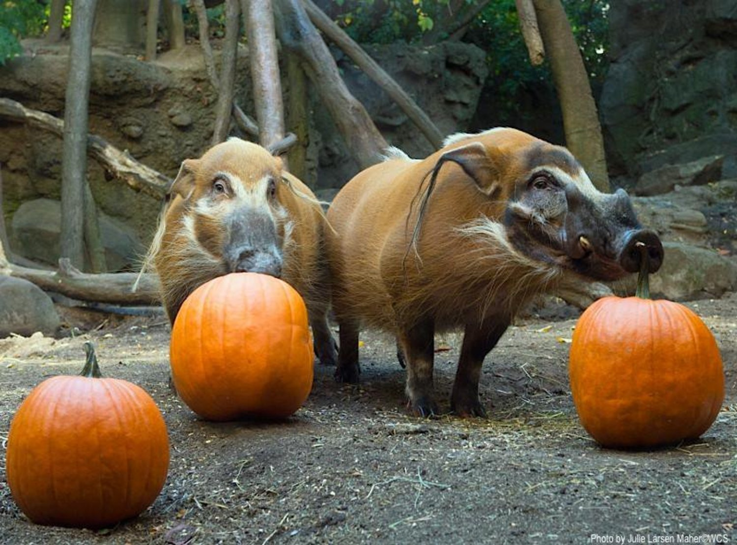 True or false: the best part of #Halloween is sharing treats with your friends? http://t.co/YZYUWPkayY