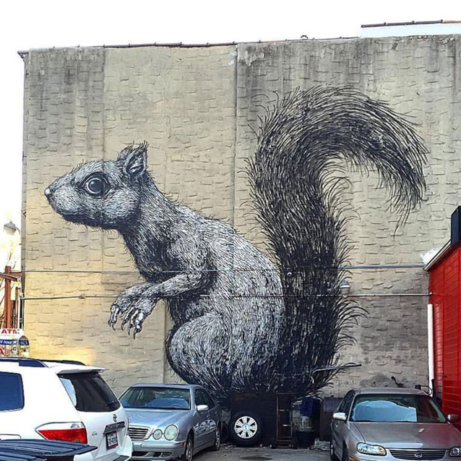 A little guy on a pretty big wall in Brooklyn by ROA.  Follow: @futbol451  _ 📸: @pzicotico