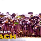 An Aquaponic Vertical Farm Grows In Brooklyn | Mach | NBC News