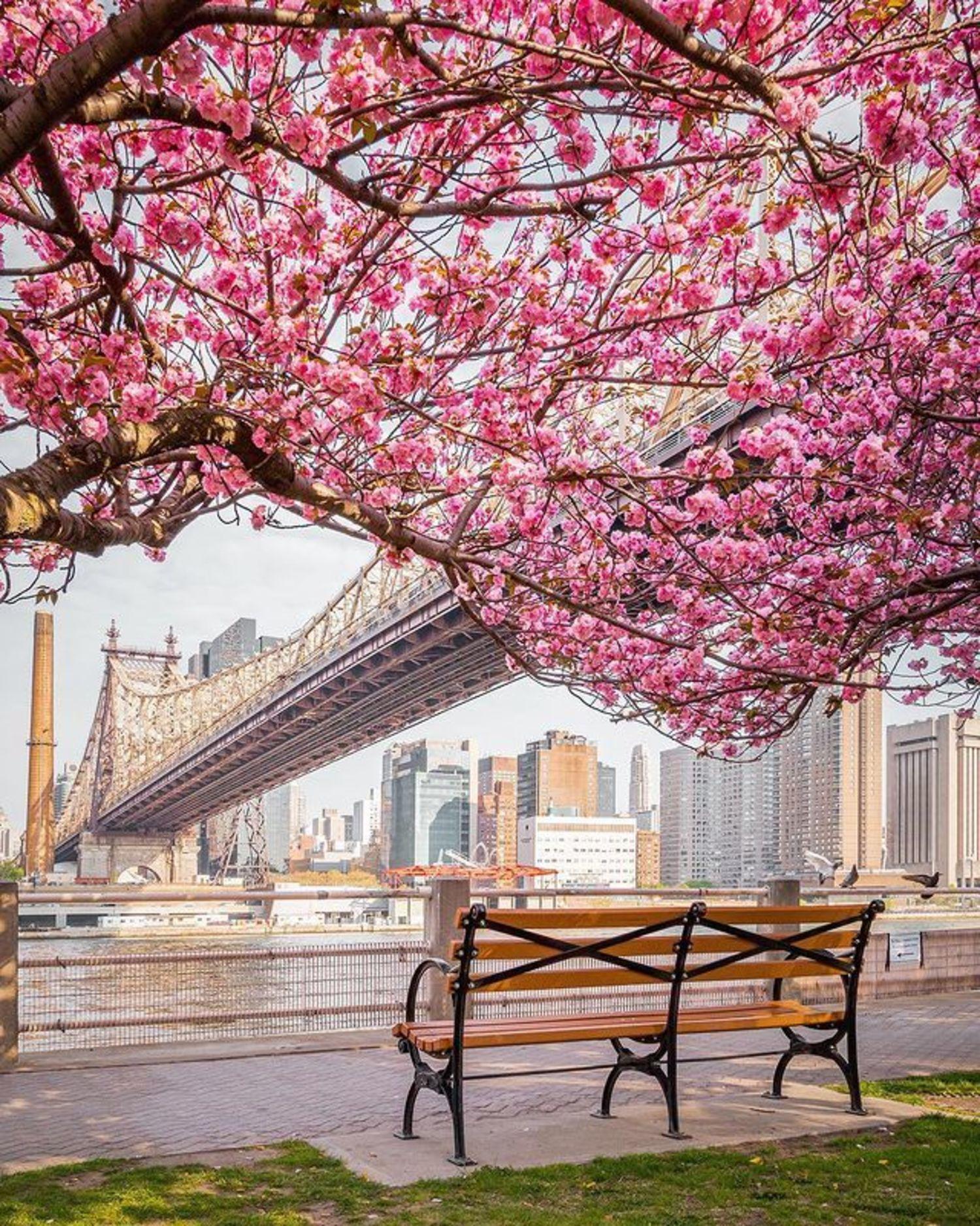 Cherry Walk, Roosevelt Island, New York