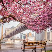 Cherry Walk, Roosevelt Island, New York