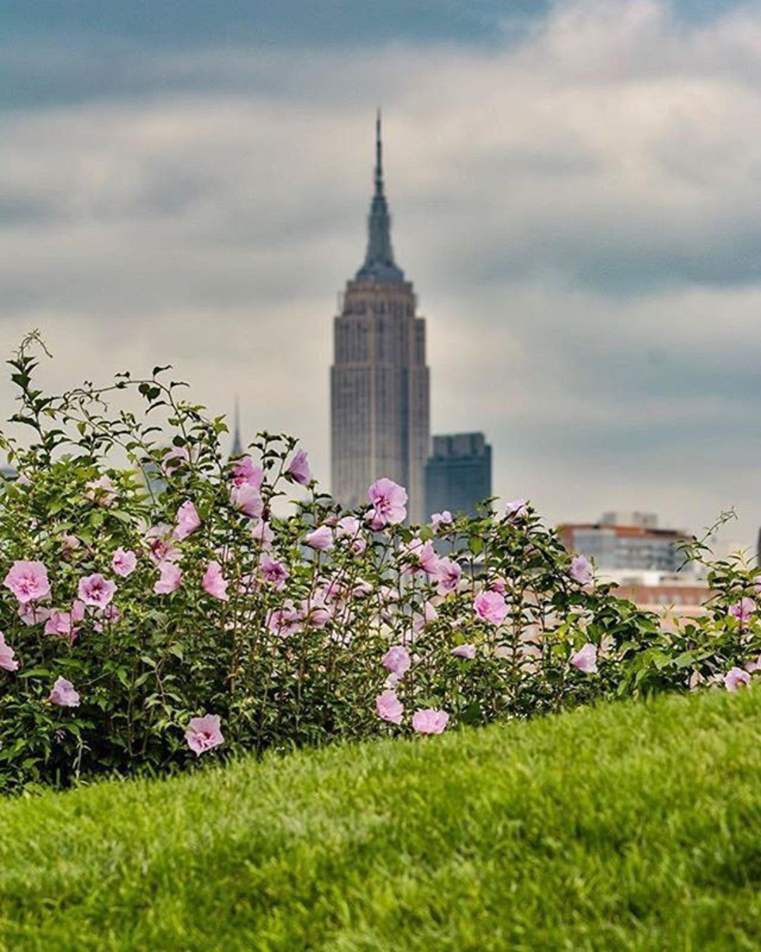 Empire State Building, New York, New York. Photo via @eyecatchingphoto #viewingnyc #newyorkcity #newyork