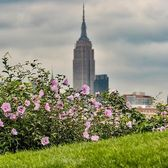 Empire State Building, New York, New York. Photo via @eyecatchingphoto #viewingnyc #newyorkcity #newyork