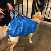 My wife just saw somebody complying with the rule about having your dog in a bag on the subways. https://t.co/0FofrfAjlf