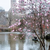 Central Park Lake, Manhattan