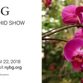 The Orchid Show Spotlight: Orchids and Their Companion Plantings