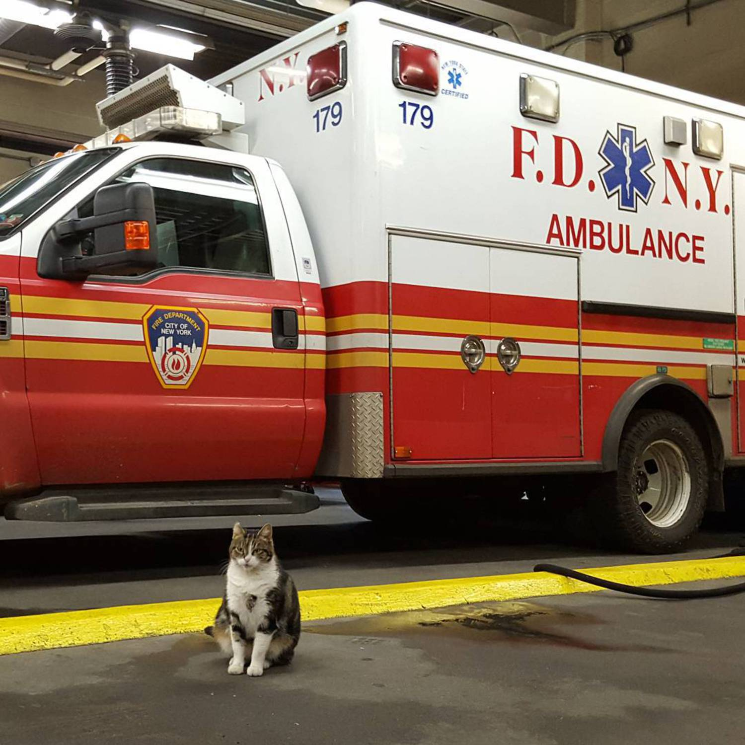 The key to hiding those extra holiday pounds is to stand next to things that are much bigger than you are. #howiworkout #notthativegottenbigger #wellmaybeihave #justalittle #whensdinnerbtw  #blameitontheholidays #advicefromthecat #nostress #imacat #littlecat #kitty #bigvehicles #ambulance #fdnyems #fdny #stationcat #firecat #workingcats #catsofnyc #brooklyncats #bedstuy #meow #tabby #tabbiesofinstagram #catsofinstagram