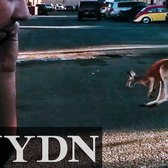 Buster the Kangaroo Hopping Around Loose in Staten Island