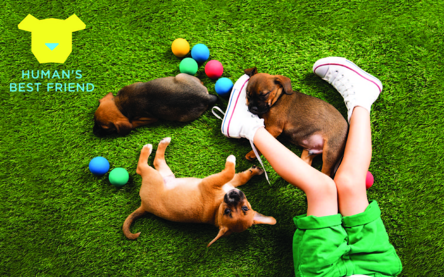 Human's Best Friend - An Immersive Pop-Up for Dogs and Dog Lovers