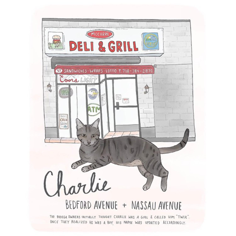 Charlie // Williamsburg  #brooklyn #williamsburg #bodegacats #bodegacatsofinstagram #brooklynbodegacats