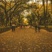"""Fall Fever! 🍁 In New York, romance is alive all year long. 🍂 🍁 💛  """