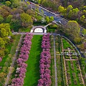 The Brooklyn Botanic Garden's Cherry Blossom Trees From Above
