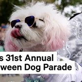 The Best of NYC's Halloween Dog Parade