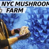 How Smallhold Farms Cultivates Rare Mushrooms for NYC Restaurants — Vendors