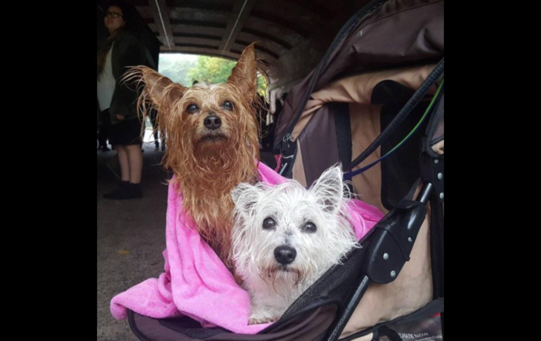 Taking shelter in Central Park
