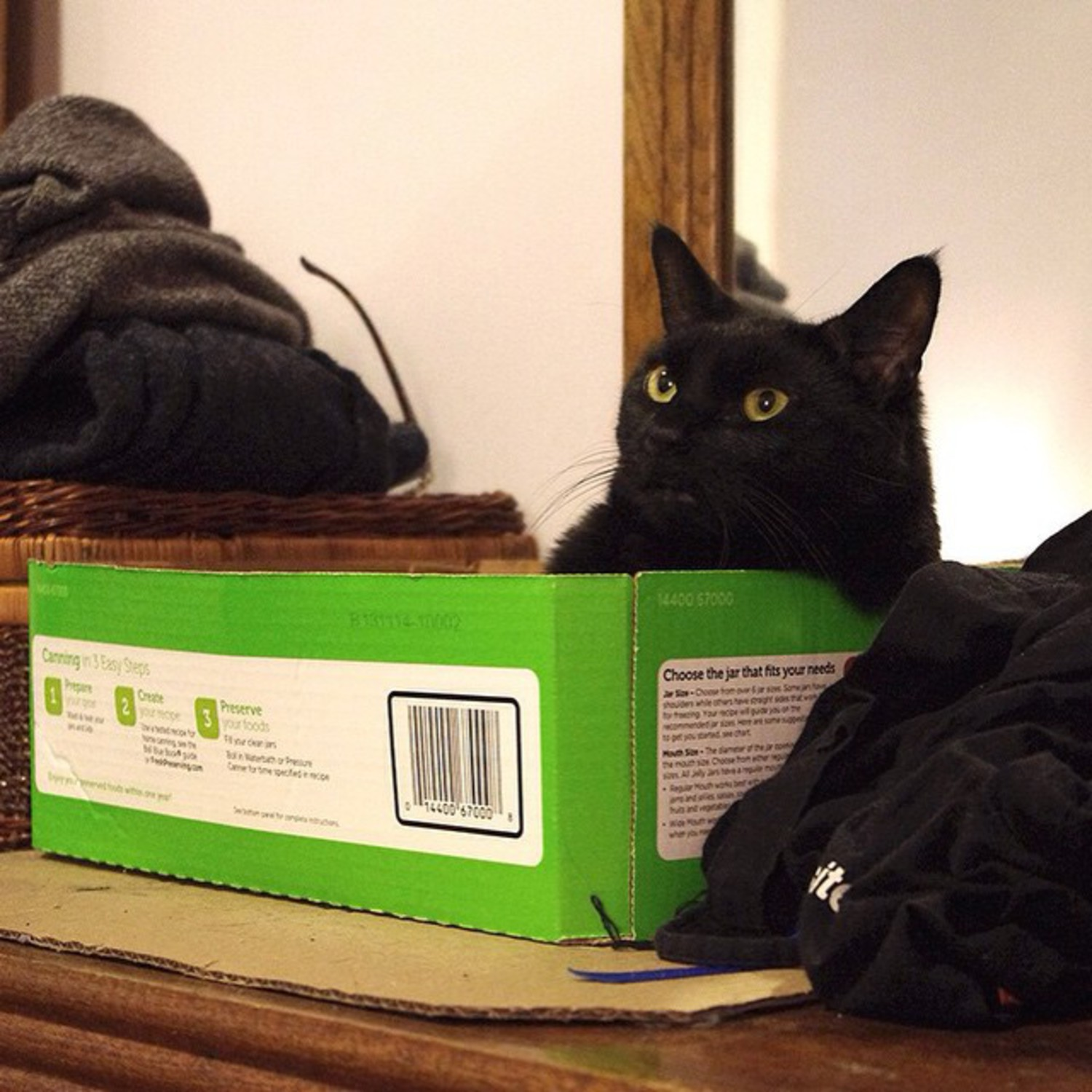 """My grandparents immigrated here from New Jersey with nothing, and now I have this box. I wish they could see me. They'd be like 'How the fuck did you get that box? We never had a box.' But I don't know, the box just kind of showed up so I sat in it."" Jeddy, Bay Ridge  #felinesofnewyork #felinesofinstagram #humansofnewyork"