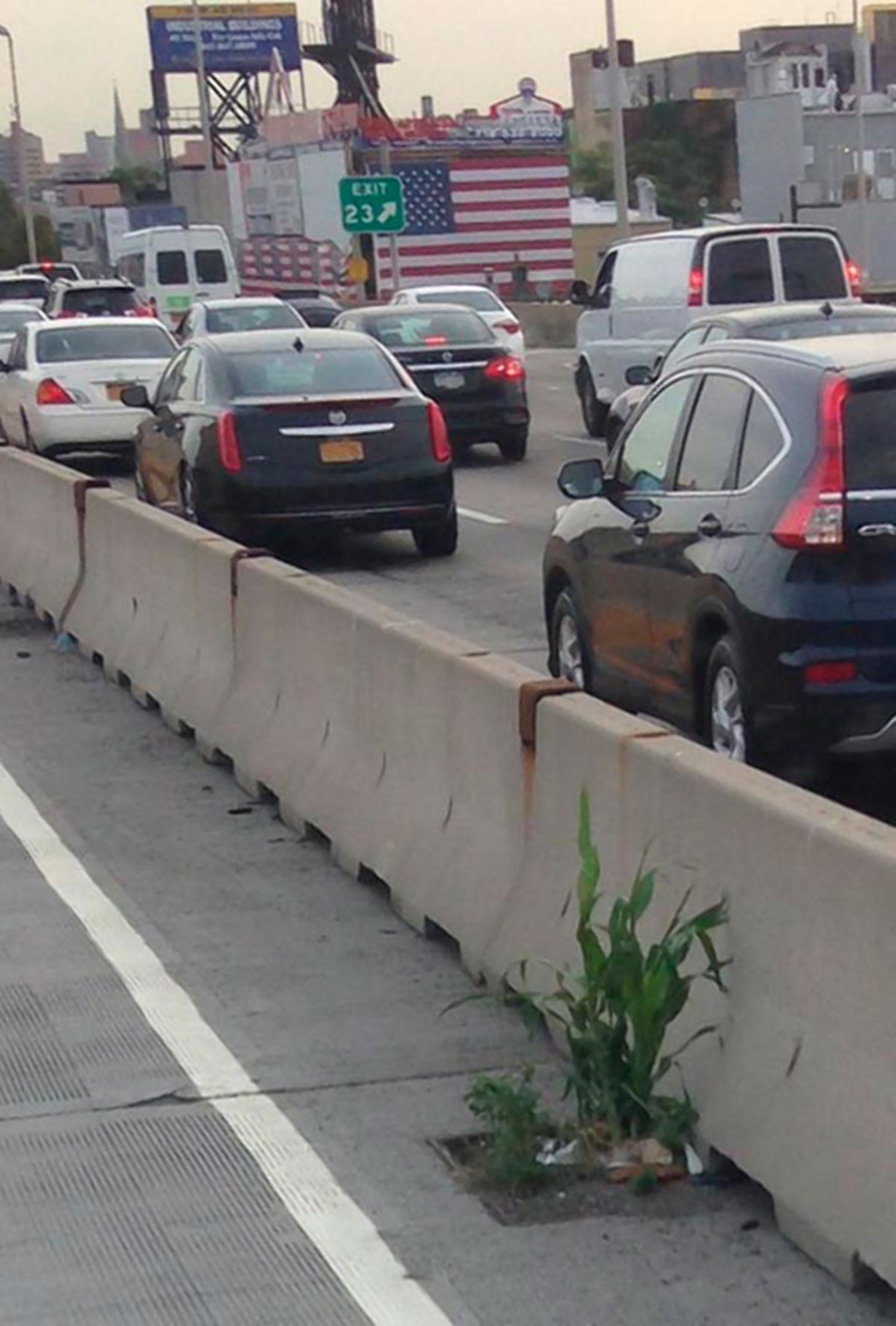 Aww shucks: Botanists say the plant growing on the shoulder of the Brooklyn–Queens Expressway is probably corn.