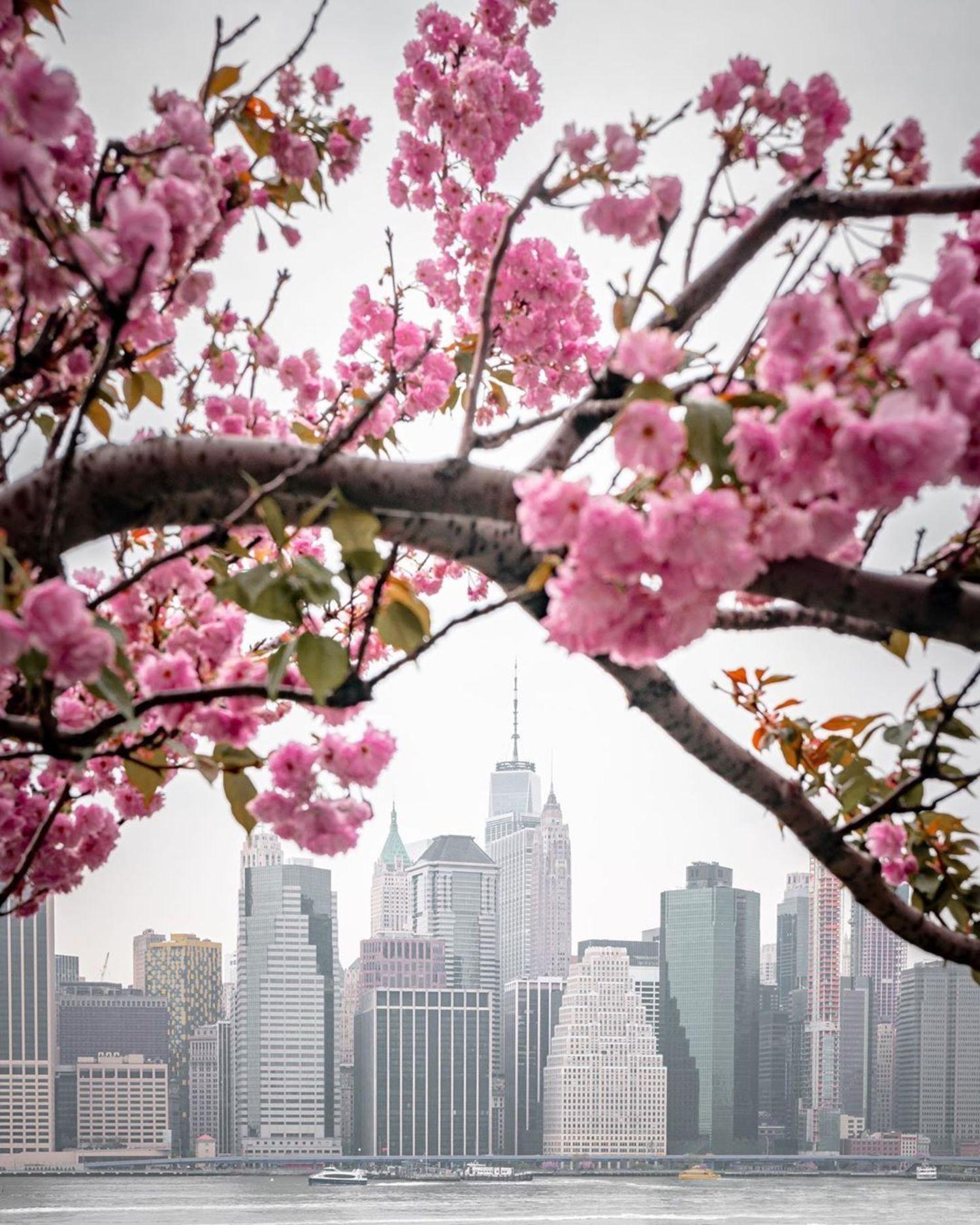 Lower Manhattan Skyline from Brooklyn